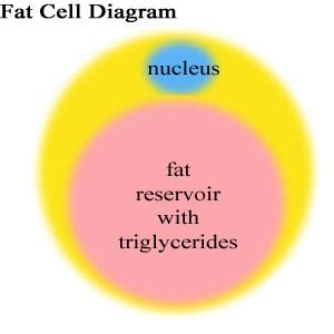 Why We Get Fat: Gary Taubes - Book Depository